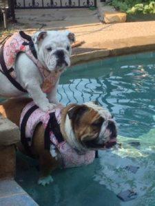 Bella and Doroth in Dog Life Vest