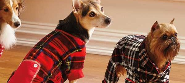 Dog Pajamas How To Choose The Right PJs By Style, Size And Fit