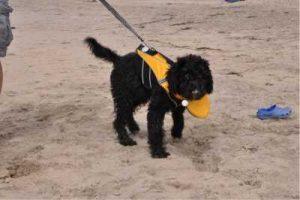 Dog Life Jacket With Chin Float