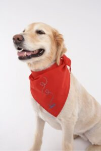 Insect Repellent Bandana For Dogs