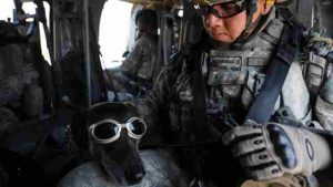 Military Dog With Goggles