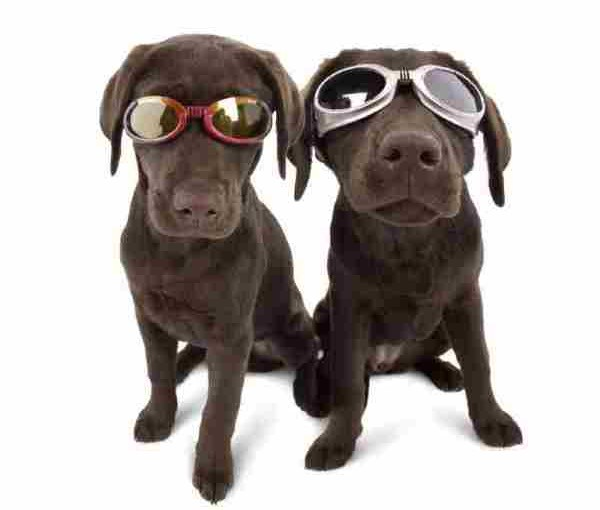 Dog Goggles – What Are They For?