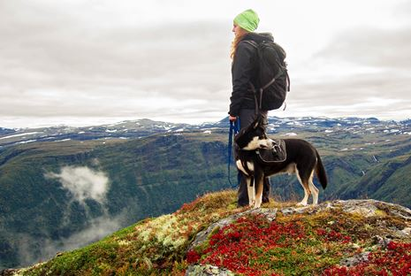 Fitness, Fido, and Finding the Right Vacation for You Both