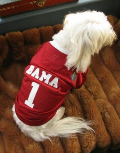 check out 3168e e9000 Alabama Crimson Tide Dog Jersey