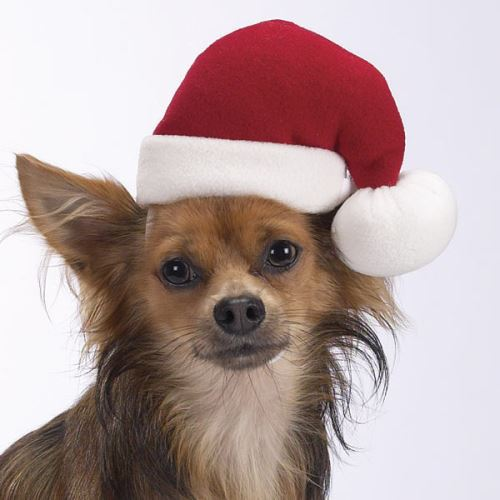 Santa claus dog hat for large dogs