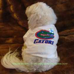 Florida Gators White Dog Tee Shirt