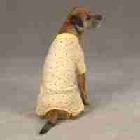 Yellow Duck Dog Pajamas