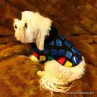 Patent Leather Accented Dog Sweater