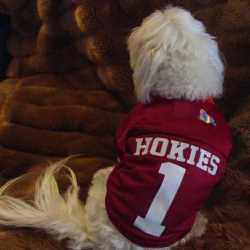 Virginia Tech Hokies Dog Jersey